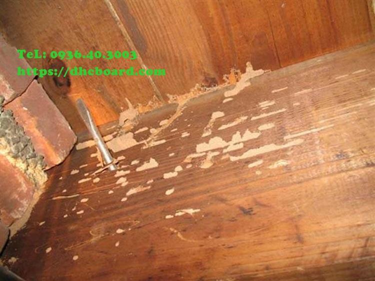 Cách khắc phục sàn nhà, sàn gác xép bị mối mọt